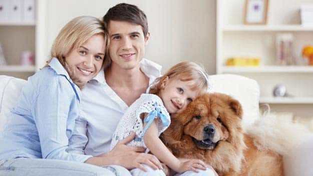 Wills & Trusts dog-young-family Direct Wills Edmonton